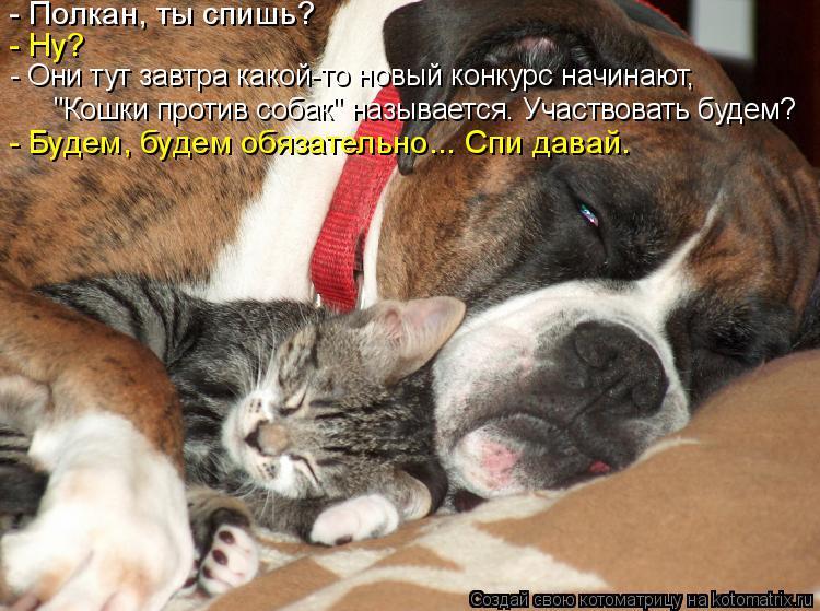 """Котоматрица: - Полкан, ты спишь? - Ну? """"Кошки против собак"""" называется. Участвовать будем? - Они тут завтра какой-то новый конкурс начинают, - Будем, будем обя"""