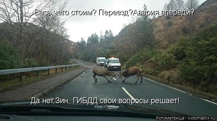 Котоматрица: Вась,чего стоим? Переезд?Авария впереди? Да нет,Зин, ГИБДД свои вопросы решает!
