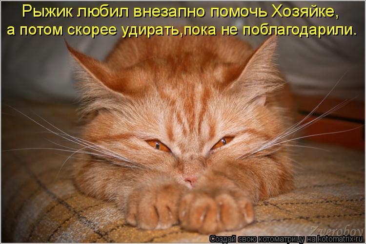 Котоматрица: Рыжик любил внезапно помочь Хозяйке Рыжик любил внезапно помочь Хозяйке, а потом скорее удирать,пока не поблагодарили.