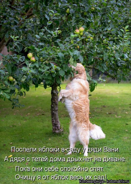Котоматрица: Поспели яблоки в саду у дяди Вани. Очищу я от яблок весь их сад! А дядя с тетей дома дрыхнет на диване. Пока они себе спокойно спят.