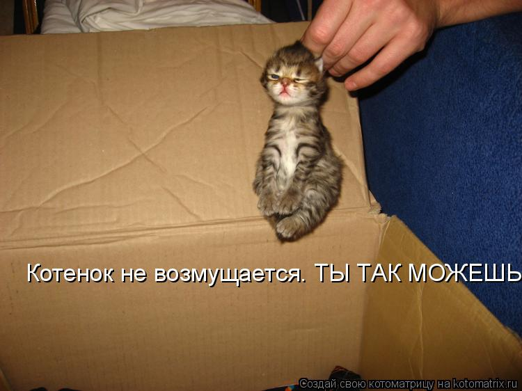 Котоматрица: Котенок не возмущается. ТЫ ТАК МОЖЕШЬ?