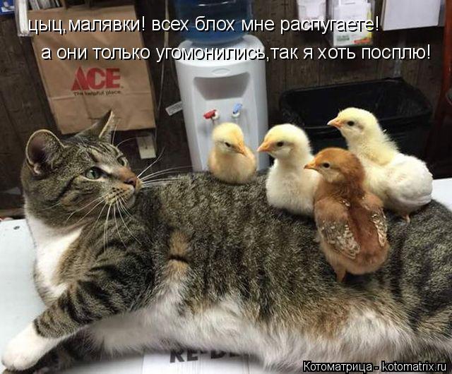 Котоматрица: цыц,малявки! всех блох мне распугаете! а они только угомонились,так я хоть посплю!
