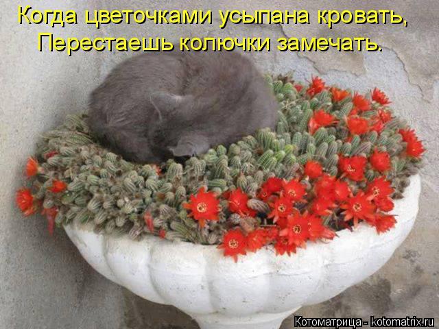 Котоматрица: Когда цветочками усыпана кровать, Перестаешь колючки замечать.