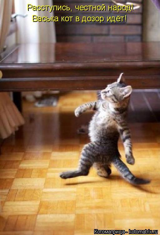 Котоматрица: Расступись, честной народ! Васька кот в дозор идёт!