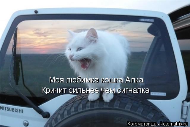 Котоматрица: Моя любимка кошка Алка Кричит сильнее чем сигналка