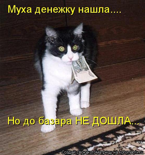 Котоматрица: Муха денежку нашла.... Но до базара НЕ ДОШЛА...