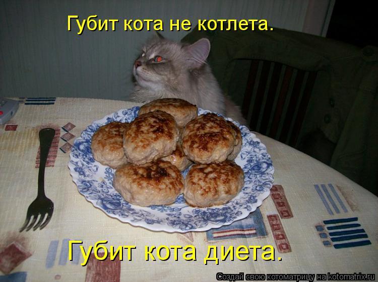 Котоматрица: Губит кота не котлета. Губит кота диета.