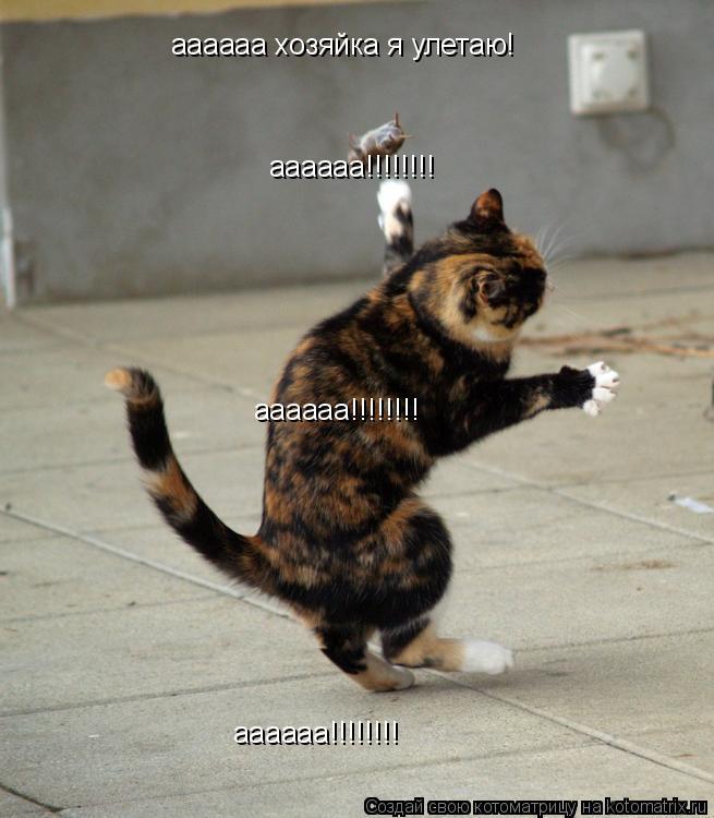 Котоматрица: аааааа хозяйка я улетаю! аааааа!!!!!!!! аааааа!!!!!!!! аааааа!!!!!!!!