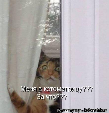 Котоматрица: Меня в котоматрицу??? За что???