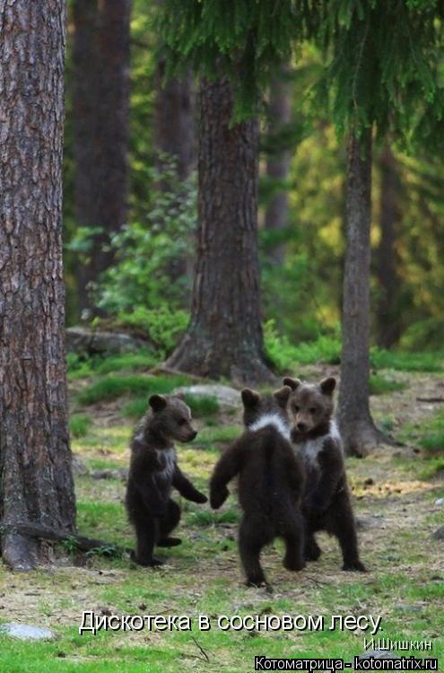 Котоматрица: Дискотека в сосновом лесу. И.Шишкин
