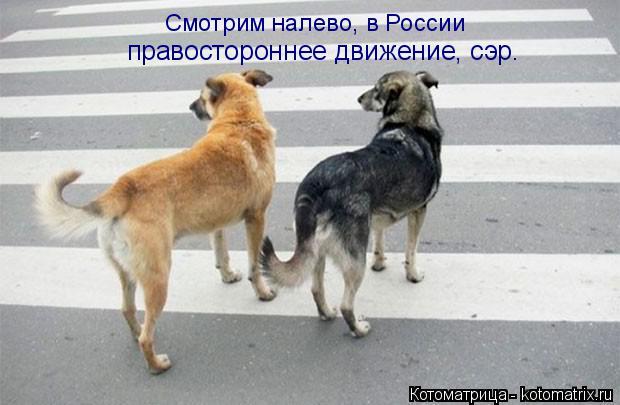 Котоматрица: Смотрим налево, в России правостороннее движение, сэр.