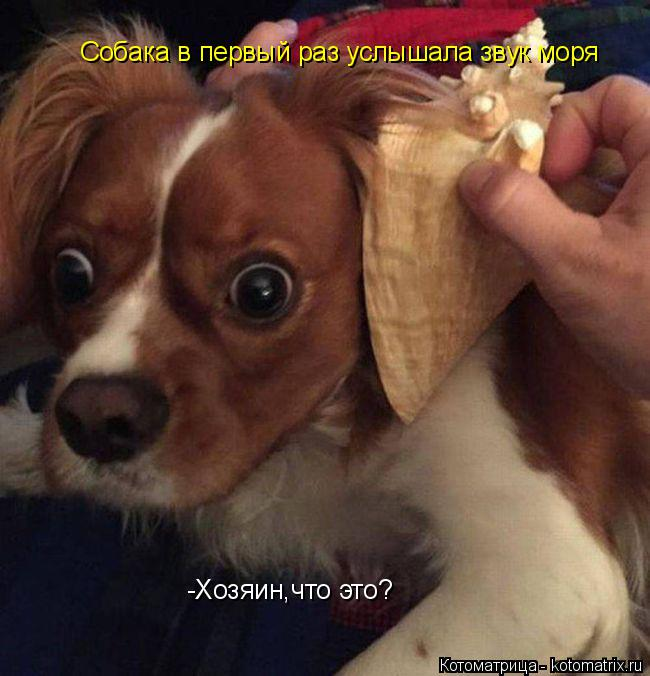 Котоматрица: Собака в первый раз услышала звук моря -Хозяин,что это?