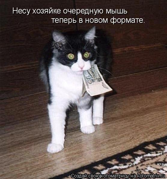Котоматрица: Несу хозяйке очередную мышь теперь в новом формате.