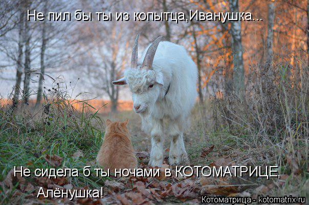 Котоматрица: Не пил бы ты из копытца,Иванушка... Не сидела б ты ночами в КОТОМАТРИЦЕ, Алёнушка!