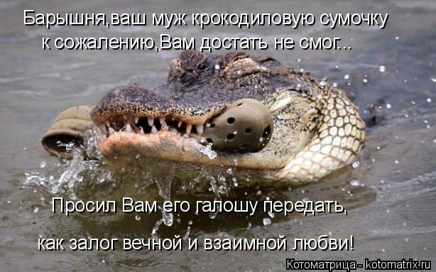 Котоматрица: Барышня,ваш муж крокодиловую сумочку к сожалению,Вам достать не смог... Просил Вам его галошу передать, как залог вечной и взаимной любви!