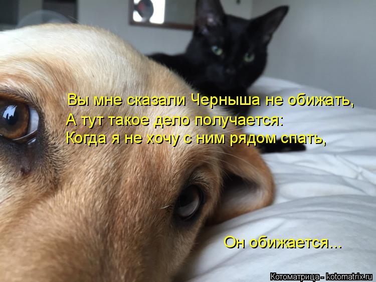 Котоматрица: Вы мне сказали Черныша не обижать, А тут такое дело получается: Когда я не хочу с ним рядом спать, Он обижается...