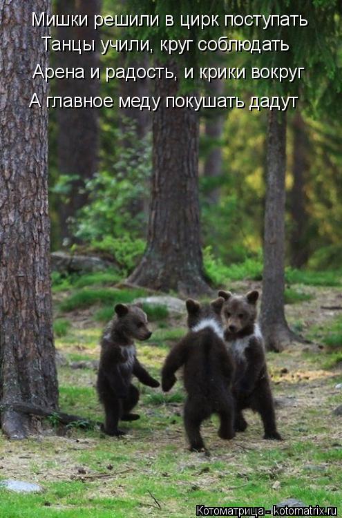 Котоматрица: Мишки решили в цирк поступать Танцы учили, круг соблюдать Арена и радость, и крики вокруг А главное меду покушать дадут