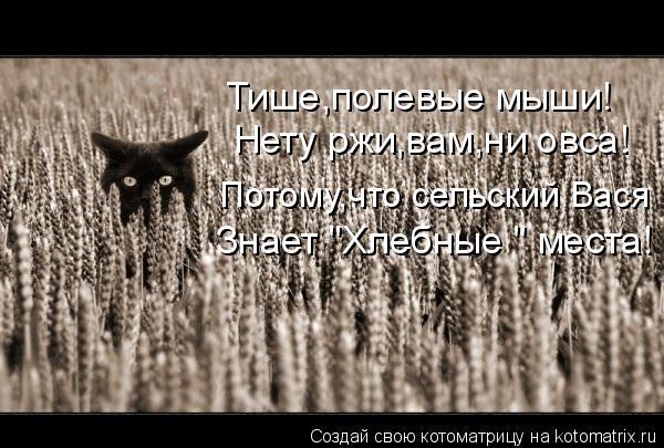 """Котоматрица: Нету ржи,вам,ни овса! Потому,что сельский Вася Знает """"Хлебные """" места! Тише,полевые мыши!"""