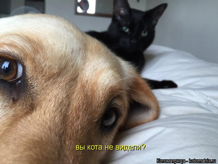 Котоматрица: вы кота не видели?