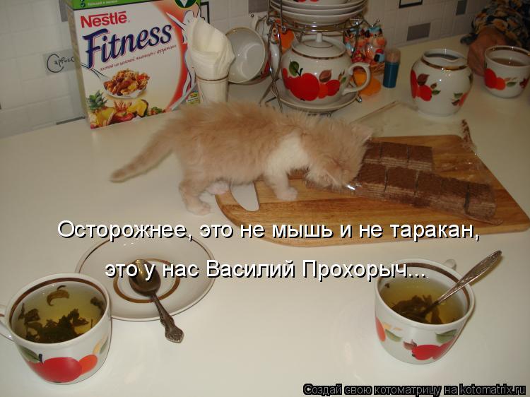 Котоматрица: Осторожнее, это не мышь и не таракан, это у нас Василий Прохорыч...