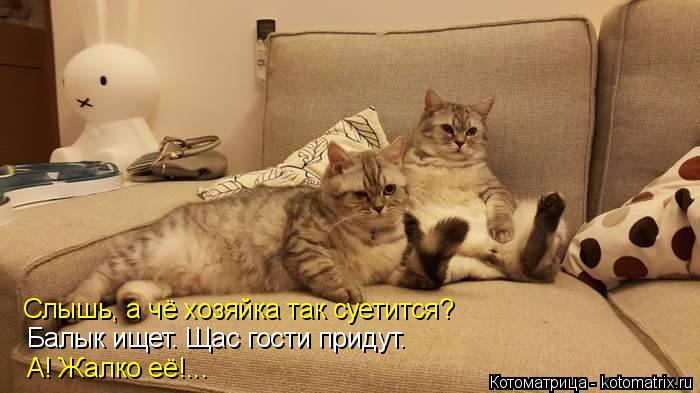 Котоматрица: Слышь, а чё хозяйка так суетится? Балык ищет. Щас гости придут. А! Жалко её!...