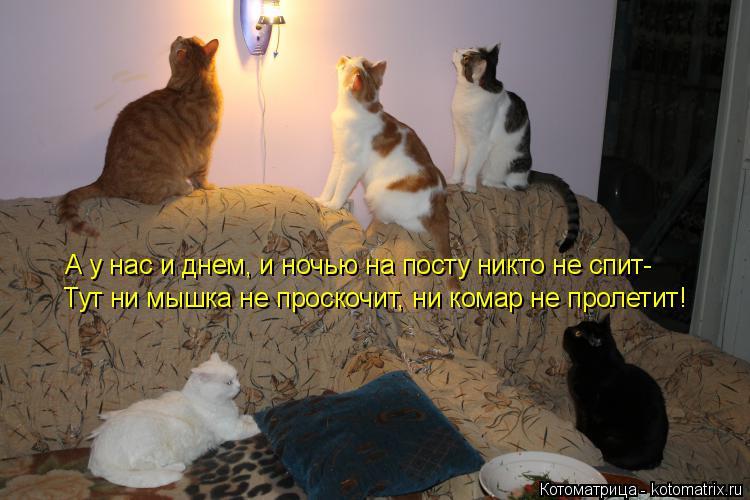 Котоматрица: А у нас и днем, и ночью на посту никто не спит- Тут ни мышка не проскочит, ни комар не пролетит!