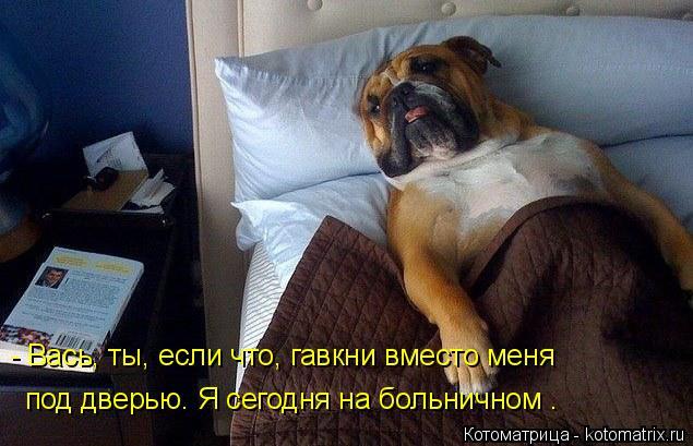 Котоматрица: - Вась, ты, если что, гавкни вместо меня  под дверью. Я сегодня на больничном .