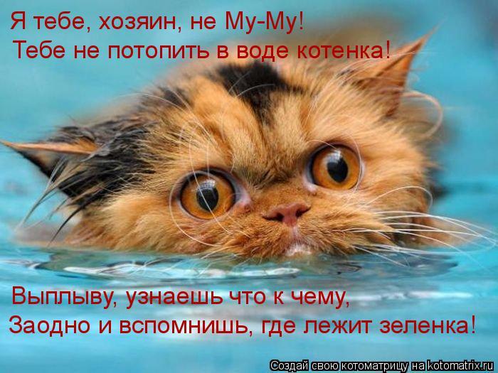 Котоматрица: Я тебе, хозяин, не Му-Му! Тебе не потопить в воде котенка! Выплыву, узнаешь что к чему, Заодно и вспомнишь, где лежит зеленка!