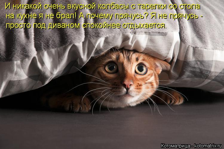 Котоматрица: на кухне я не брал! А почему прячусь? Я не прячусь -  просто под диваном спокойнее отдыхается. И никакой очень вкусной колбасы с тарелки со ст