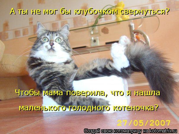 Котоматрица: А ты не мог бы клубочком свернуться? Чтобы мама поверила, что я нашла маленького голодного котеночка?