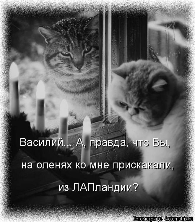 Котоматрица: Василий... А, правда, что Вы, на оленях ко мне прискакали, из ЛАПландии?