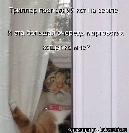 Котоматрица: И эта большая очередь мартовских  кошек ко мне? Триллер последний кот на земле..