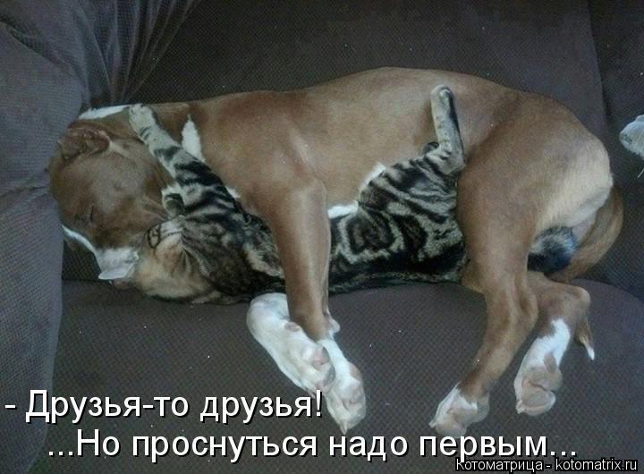 http://kotomatrix.ru/images/lolz/2015/11/27/Or.jpg