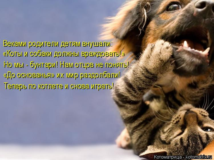 http://kotomatrix.ru/images/lolz/2015/11/27/f.jpg