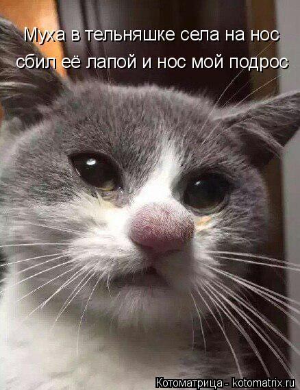 Котоматрица: Муха в тельняшке села на нос сбил её лапой и нос мой подрос