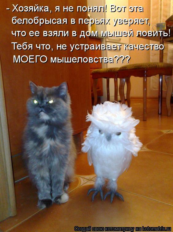 Котоматрица: - Хозяйка, я не понял! Вот эта  белобрысая в перьях уверяет, что ее взяли в дом мышей ловить! Тебя что, не устраивает качество МОЕГО мышеловств