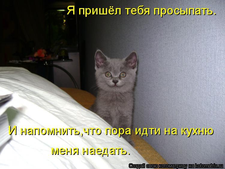 Котоматрица: Я пришёл тебя просыпать. И напомнить,что пора идти на кухню меня наедать.