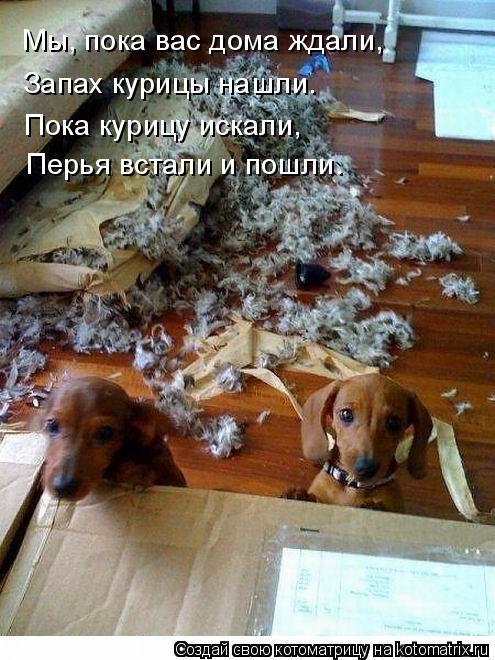 Котоматрица: Мы, пока вас дома ждали, Запах курицы нашли. Пока курицу искали, Перья встали и пошли.