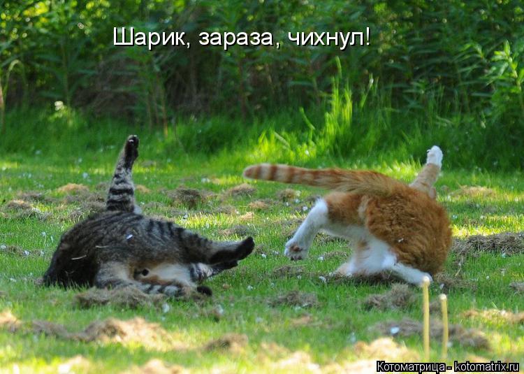 Котоматрица: Шарик, зараза, чихнул!