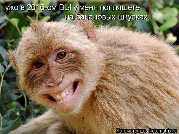 Котоматрица: ужо в 2016-ом ВЫ у меня попляшете  на банановых шкурках !