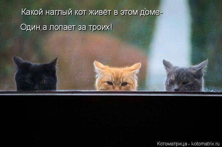 Котоматрица: Какой наглый кот живёт в этом доме- Один,а лопает за троих!