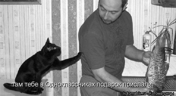 Котоматрица: там тебе в Одноклассниках подарок прислали....