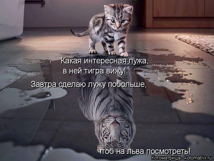 Котоматрица: Какая интересная лужа, в ней тигра вижу! Завтра сделаю лужу побольше, чтоб на льва посмотреть!