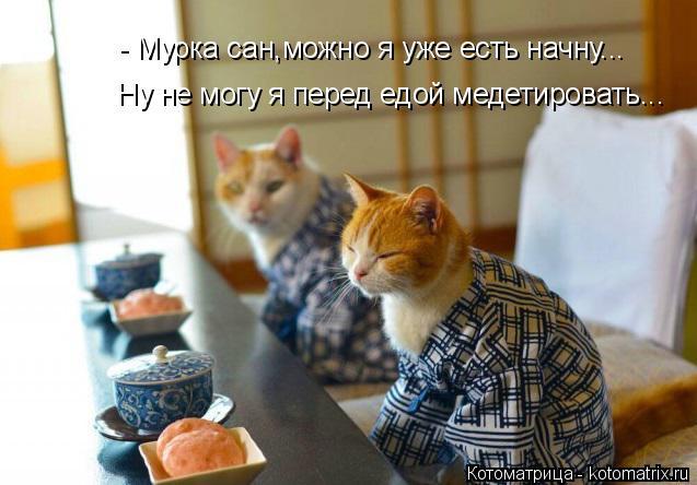Котоматрица: - Мурка сан,можно я уже есть начну... Ну не могу я перед едой медетировать...
