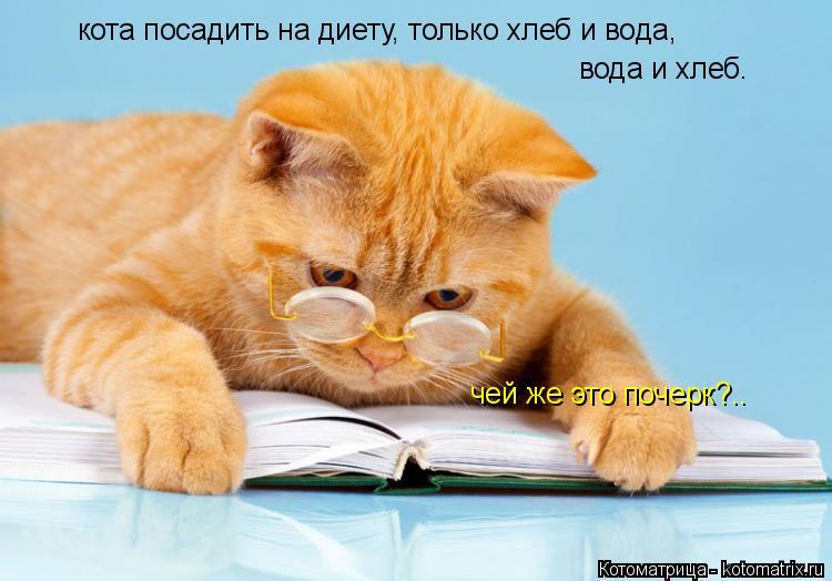 Котоматрица: кота посадить на диету, только хлеб и вода, вода и хлеб. чей же это почерк?..