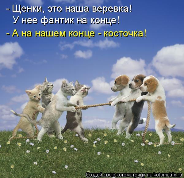 http://kotomatrix.ru/images/lolz/2015/11/30/d.jpg