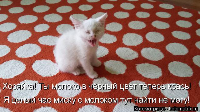 Котоматрица: Хозяйка! Ты молоко в чёрный цвет теперь крась! Я целый час миску с молоком тут найти не могу!