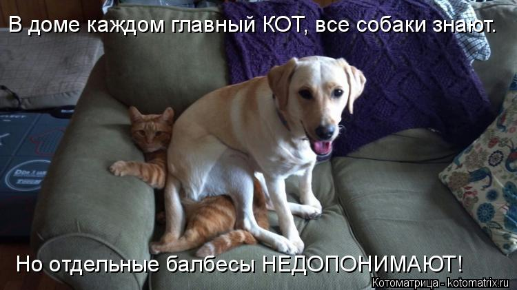 Котоматрица: В доме каждом главный КОТ, все собаки знают. Но отдельные балбесы НЕДОПОНИМАЮТ!