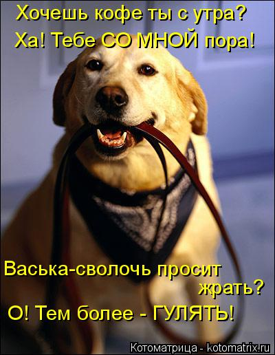 http://kotomatrix.ru/images/lolz/2015/12/01/h.jpg