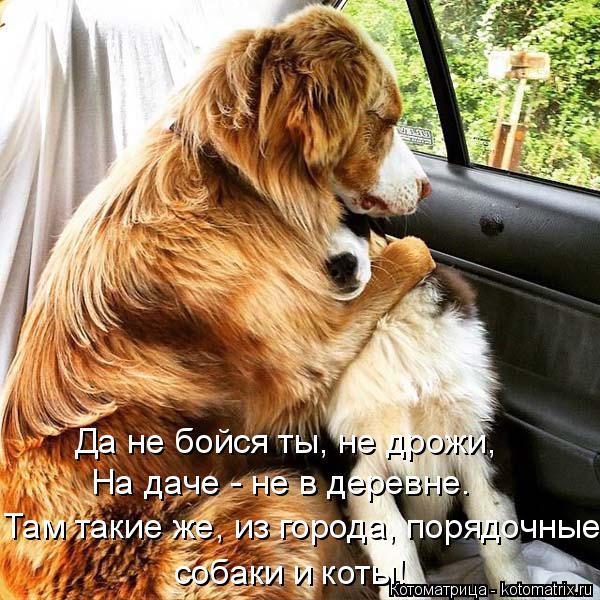 Котоматрица: Да не бойся ты, не дрожи, На даче - не в деревне.  Там такие же, из города, порядочные собаки и коты!